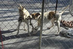 Photo #5: DOG TRAINING AND BOARDING