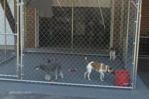 Photo #1: DOG TRAINING AND BOARDING