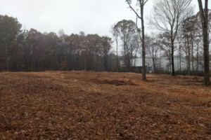 Photo #1: Forestry mulching/Land clearing
