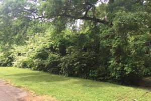 Photo #4: Land And Site Contractors, LLC. Land Maintenance