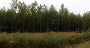 Photo #2: Land And Site Contractors, LLC. Land Maintenance