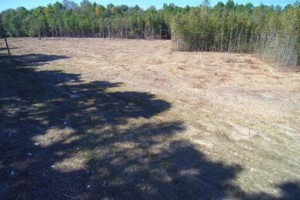 Photo #1: Land And Site Contractors, LLC. Land Maintenance