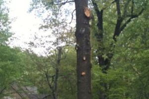 Photo #14: TIMBER TREE SERVICE *FREE ESTIMATES*