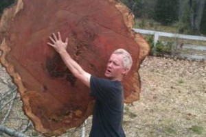 Photo #13: TIMBER TREE SERVICE *FREE ESTIMATES*