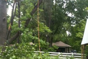 Photo #10: TIMBER TREE SERVICE *FREE ESTIMATES*