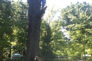 Photo #9: TIMBER TREE SERVICE *FREE ESTIMATES*