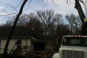 Photo #7: TIMBER TREE SERVICE *FREE ESTIMATES*