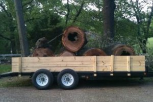 Photo #4: TIMBER TREE SERVICE *FREE ESTIMATES*