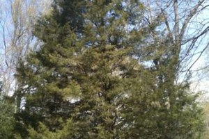 Photo #3: TIMBER TREE SERVICE *FREE ESTIMATES*