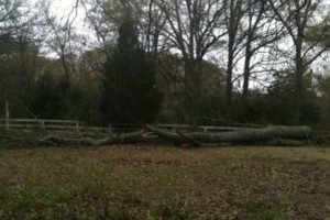 Photo #2: TIMBER TREE SERVICE *FREE ESTIMATES*