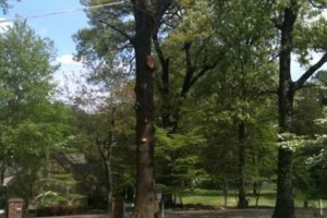 Photo #1: TIMBER TREE SERVICE *FREE ESTIMATES*