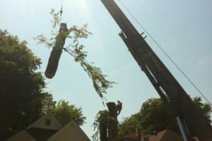Photo #2: Tree Monkey. Full Service Tree Company