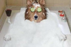 Photo #1: Loving Care Professional Dog Grooming. FEBRUARY SPECIAL!