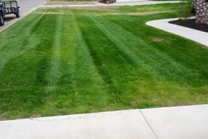 Photo #11: Pride Lawns - Lawn Care!