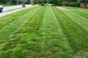 Photo #10: Pride Lawns - Lawn Care!