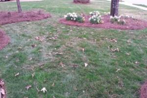 Photo #5: Pride Lawns - Lawn Care!