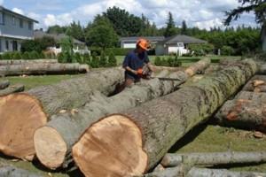 Photo #5: K WEST TREE SERVICE