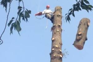 Photo #4: K WEST TREE SERVICE