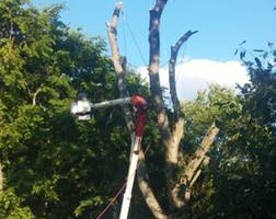 Photo #3: K WEST TREE SERVICE