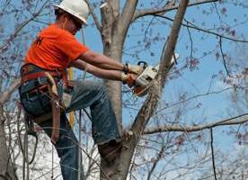 Photo #2: K WEST TREE SERVICE