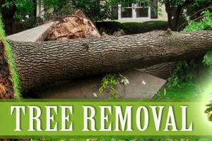Photo #1: AFFORDABLE TREE & LANDSCAPING. FREE ESTIMATES AND COMPETITIVE PRICES.