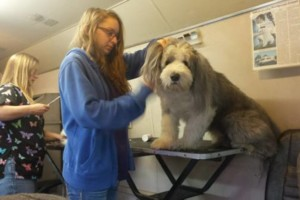 Photo #2: Artistry n fur. Pet Grooming Dogs and Cats