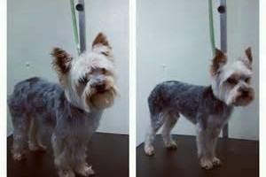 Photo #1: Professional pet groomer