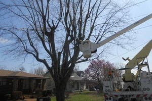 Photo #3: Did the Winter Storm Damage your Trees? NO Problem! Call TREEMASTERS!