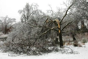 Photo #2: Did the Winter Storm Damage your Trees? NO Problem! Call TREEMASTERS!