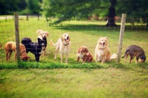 Photo #9: DogMa Pet Sitting & Sleep-Away Camp. BOARDING AND DOGGY DAY CARE