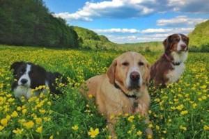 Photo #7: DogMa Pet Sitting & Sleep-Away Camp. BOARDING AND DOGGY DAY CARE