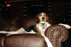 Photo #4: DogMa Pet Sitting & Sleep-Away Camp. BOARDING AND DOGGY DAY CARE