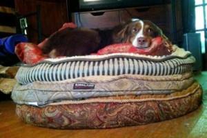 Photo #3: DogMa Pet Sitting & Sleep-Away Camp. BOARDING AND DOGGY DAY CARE