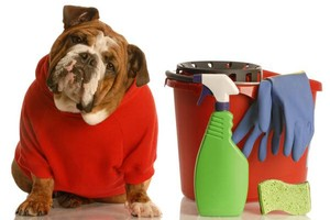 Photo #1: Move In/Out Cleaning $175 (Flat Rate)