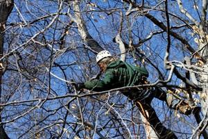Photo #1: Evergreen Tree Service