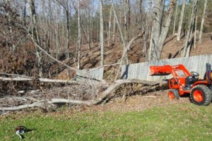 Photo #1: Mowing /bush hogging /clean up