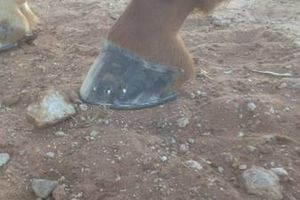 Photo #1: FARRIER SERVICES!