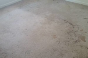 Photo #4: CARPET CLEANING SPECIAL! 5 Rooms + Hallway $65