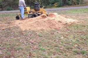 Photo #1: Hughes Tree and Stump Removal