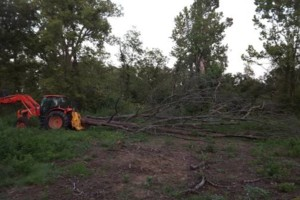 Photo #1: Phelps Land Restoration. Land Clearing and Logging Cleanup