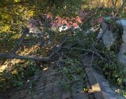 Photo #3: Ramon's Professional Tree Service