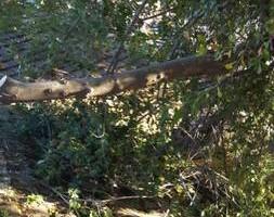 Photo #4: Ramon's Professional Tree Service