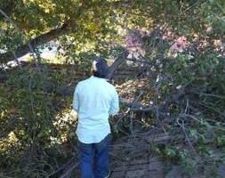 Photo #5: Ramon's Professional Tree Service