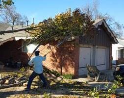 Photo #6: Ramon's Professional Tree Service