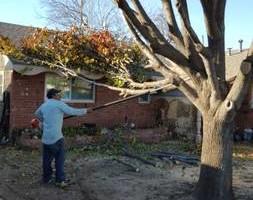 Photo #7: Ramon's Professional Tree Service