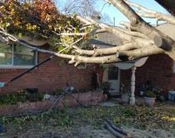 Photo #8: Ramon's Professional Tree Service
