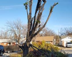 Photo #9: Ramon's Professional Tree Service