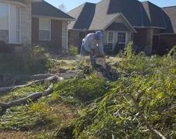 Photo #11: Ramon's Professional Tree Service