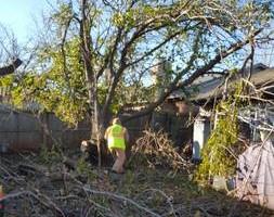 Photo #12: Ramon's Professional Tree Service