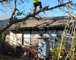 Photo #13: Ramon's Professional Tree Service